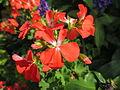 Colores y olores en las flores del Valle.JPG