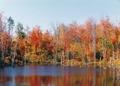 Coloris d'automne. Étang près du lac Notre-Dame, Montfort..tif