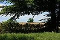 Combine harvester near Braddock Church - geograph.org.uk - 1139946.jpg