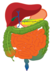 Complete GI tract - sized.png