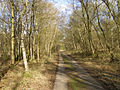 Concrete track through Harewood Forest - geograph.org.uk - 147464.jpg