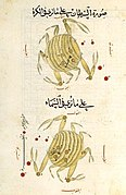 Constellation Crabe - al-Sufi.jpg