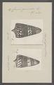 Conus generalis - - Print - Iconographia Zoologica - Special Collections University of Amsterdam - UBAINV0274 086 07 0044.tif