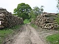 Coppiced Wood Pile - geograph.org.uk - 1291029.jpg