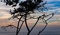 Cormorants silhouette in La Jolla (70737).jpg