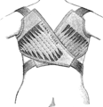 CorsetLeonJulesRAINAL Freres19a.png
