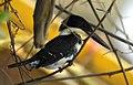 Costa Rica DSCN1821-new (30762092070).jpg