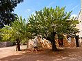 Cour et arbres de l'Abbaye du Thoronet.jpg