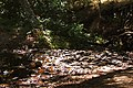 Creek - Sugarloaf Ridge State Park.jpg
