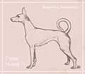 Cretan Hound, drawing by Maria Gkinala.jpg