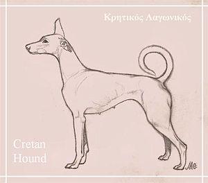 Cretan Hound - Cretan Hound, drawing by Maria Gkinala