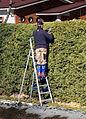 Cutting hedge.jpg