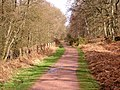 Cycle Track, Forest of Dean - geograph.org.uk - 145411.jpg