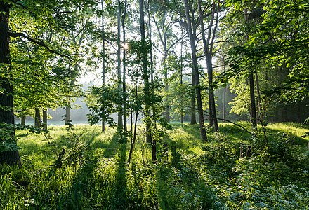 "Nature reserve ""Am Enteborn"" in Dülmen, Germany"