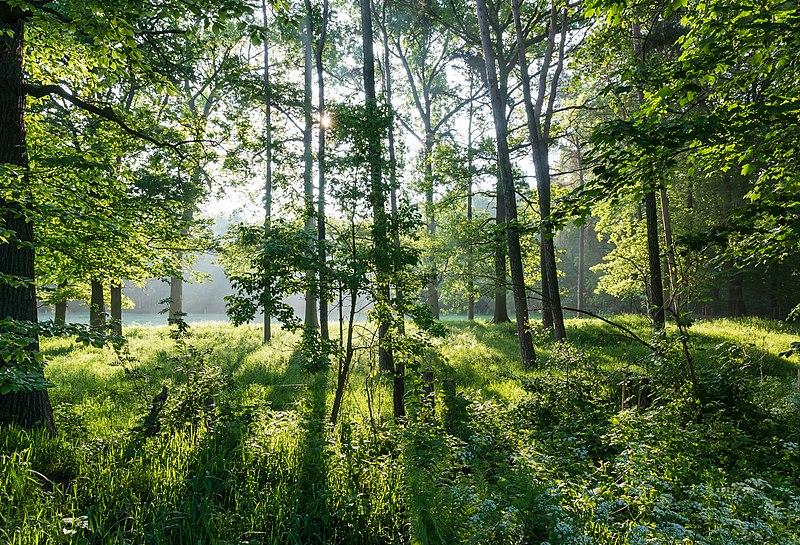 File:Dülmen, Naturschutzgebiet -Am Enteborn- -- 2014 -- 0202.jpg