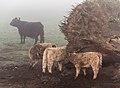 Dülmen, Naturschutzgebiet -Welter Bachauen- -- 2014 -- 1.jpg