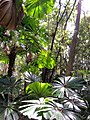 Daintree National Park, Queensland 08.jpg