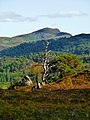 Dead Tree - panoramio.jpg