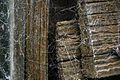 Decaying Woodword With Spider Webs UK.jpg