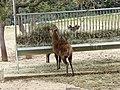Deer (2380418834).jpg