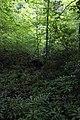 Delaware Water Gap 03.jpg