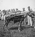 Demonstraties paardendepot Z Sumatra laspaard bepakt met Vickers machinegeweer, Bestanddeelnr 15651.jpg