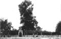 Denkschrift Eisenbahn Jagstfeld-Neuenstadt Bild Neuenstadt Linde.png
