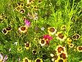 Denzlingen Blumen - panoramio (2).jpg