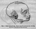 Descent of Man - Burt 1874 - Fig 3.png