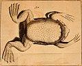 Developpement parfait du mystère de la génération du fameux crapaud de Surinam, nommé (1765) (14771060284).jpg