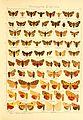 Die Gross-Schmetterlinge der Erde (Taf. 14) BHL9921417.jpg