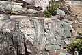 Dikes intruding tillite (Nipissing Diabase & Gowganda Formation, Paleoproterozoic; Percival Lake roadcut, Ontario, Canada) 1 (47727719301).jpg