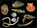 Diversité des mollusques.png