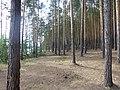 Dobryanskiy r-n, Permskiy kray, Russia - panoramio (276).jpg