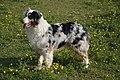 Dog-326650 1280 (20495706962).jpg