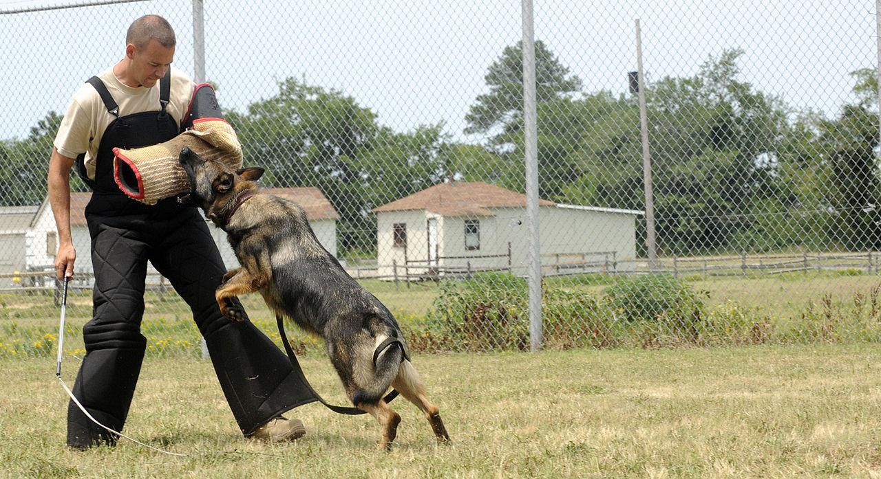 Dog Days Training Bari Halperin