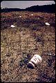 Doll face as trash-552078.jpg