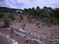 Domaine saint antoine après débroussaillage - panoramio (2).jpg