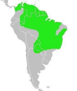 Donacobius atricapillus-map