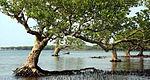 Dongzhai Mangrove Nature Reserve