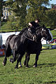 Dressage avec 2 chevaux mondial du cheval percheron 2011Cl J Weber04 (23787817870).jpg