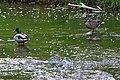 Ducks In Rouge River.jpg