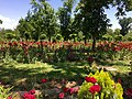 Dushanbe, Tajikistan - panoramio (113).jpg