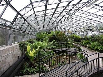Duthie Park - Image: Duthie Park ferns