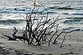 Dzika plaża - panoramio (1).jpg