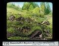 ETH-BIB-Gwandelenfluh-Bergsturz, Rasenwülste, rechtes Ufer-Dia 247-00927.tif