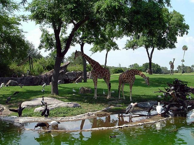 Busch Gardens Tampa Sehensw Rdigkeit In Tampa Florida