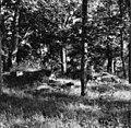 Edsberg, Riseberga klosterruin - KMB - 16000200047796.jpg