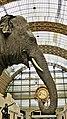 Eléphante Marguerite (ou Parkie) au Musée d'Orsay 14.jpg