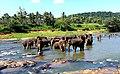 Elephants waiting for a bath.jpg